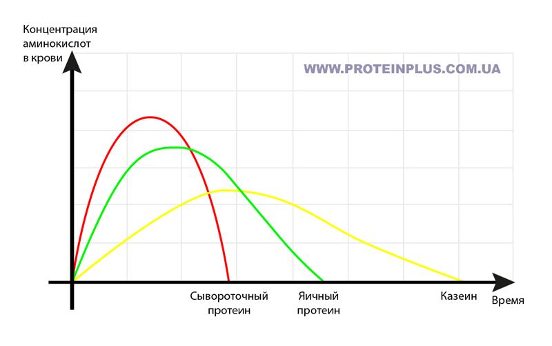 Скорость усвоения различных видов протеина